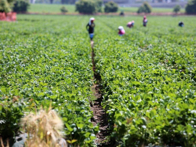 Agriculture Industry amidst Stiff Competition